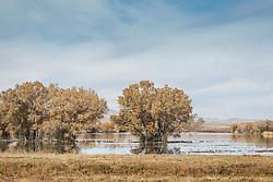 Bosque De Apache, New Mexico e Bosque del Apache National Wildlife Refuge (/ˈboʊskɛ dɛl əˈpætʃi/ BOH-skeh del ə-PATCH-ee) is located in southern New Mexico. It was founded in 1939 and is administered by the U.S. Fish and Wildlife Service. It is a favorite spot to watch the migration of the Sandhill cranes in the fall. The reserve is open year-round and provides safe harbor for its varied wildlife