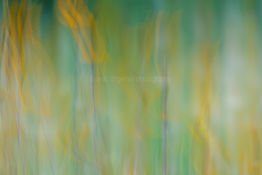 Wildflower abstract,  Hill Country region, Texas, USA
