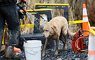 Nexus the rescue dog is hosed down in the decontamination area at the mudslide after searching for victims in Oso, Washington March 30, 2014. Local churches offered prayers on Sunday for the victims of last week's devastating mudslide in Washington state and words of solace for grieving families and friends, many of whom are still waiting for news of missing loved ones.  REUTERS/Rick Wilking (UNITED STATES)
