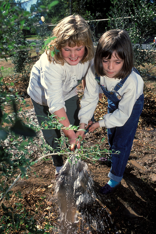 Anglo 3rd grade girl planting tree with teacher at Elementary school in Austin, Texas. ©Bob Daemmrich/