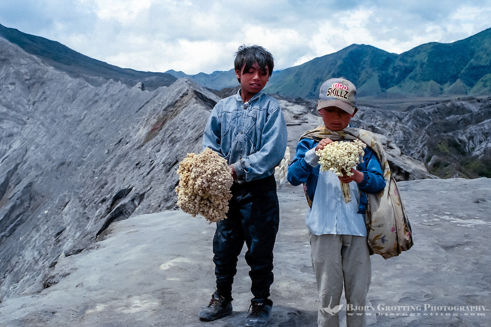 Java, East Java, Mount Bromo. Two local boys selling dried flowers at the Bromo crater rim. Anaphalis javanica or Javanese Edelweiss is now probably extinct in this area.