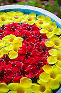 Blommor placerade i vatten välkomnar gästerna på Kaivalyadhama, Lonavla, Maharashtra, Indien.
