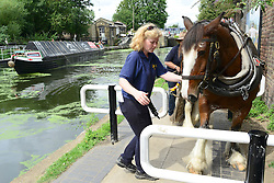 © Licensed to London News Pictures. 23/08/2012. London, UK. Buddy negotiates 20th century obstacles. Ilkeston, a restored narrowboat, is towed by a horse, Buddy, a 13-year-old Clydesdale, across London's canal network, on its way to the London Canal Museum. It has journeyed from Ellesmere Port in Cheshire, through more than 100 locks, to London to celebrate its 100th birthday. Photo credit : Stephen Simpson/LNP