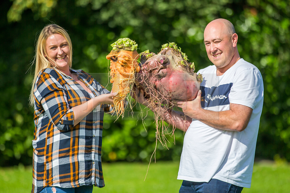 © Licensed to London News Pictures. 13/09/2019. Harrogate UK. Couple Chris Marriott & Laura Litchfield who won the heaviest Carrot weighing 3.8kg & the heaviest Beetroot weighing 17.8 kg at the giant vegetable competition at the Harrogate Flower Show in Harrogate today in Yorkshire. Photo credit: Andrew McCaren/LNP