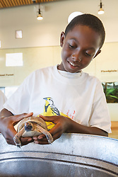 Children in nature education program learning how to handle a box turtle, Trinity River Audubon Center, Dallas, Texas, USA.