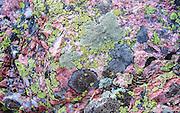 Lichen on Quartz Rock