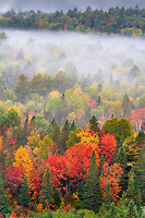 https://Duncan.co/fog-and-fall-color-in-the-morning