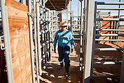 26 NOVEMBER 2011 - CHANDLER, AZ:   The son of a rodeo competitor walks behind the chutes at the Grand Canyon Pro Rodeo Association (GCPRA) Finals at Rawhide Western Town in west Chandler, AZ, about 20 miles from Phoenix Saturday. The GCPRA Finals is the last rodeo of the GCPRA season. The GCPRA is a professional rodeo association based in Arizona.      PHOTO BY JACK KURTZ