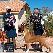 Boxer Club of Arizona 2020