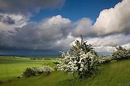 Ivinghoe Beacon, Buckinghamshire, Uk
