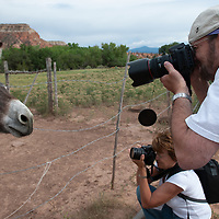 Photography students look for angles on a burro near Santa Fe, New Mexico.