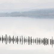 Timber Ponds VII, Kelburn, Inverclyde, Scotland.