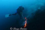 diver pulls off sample of hot lava from Kilauea Volcano erupting underwater, Puna, Hawaii Island ( the Big Island ), Hawaii, U.S.A. ( Central Pacific Ocean ) MR 310