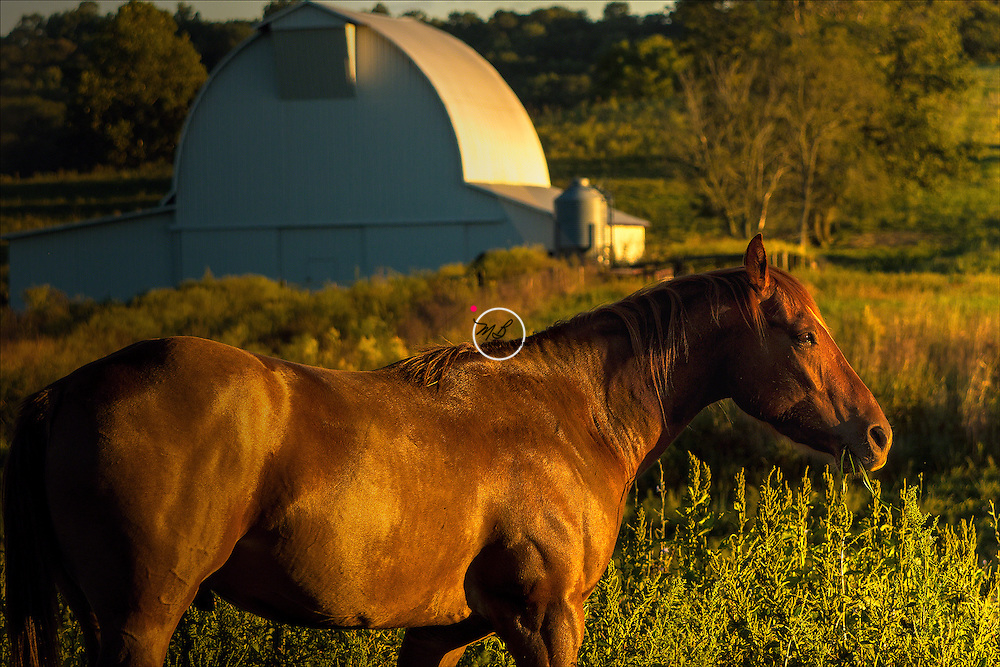Sorrel Horse at Ferguson Farm