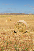 Round hay bales in a paddock on a farm after baling in rural Cambri, South Australia, Australia. <br /> <br /> Editions:- Open Edition Print / Stock Image