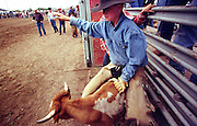 05 AUGUST 2000 - WILLIAMS, AZ: T.J. Dent, 10, from Wickieup, Arizona, holds onto his steer as the animal is turned loose during the steer riding contest for cowboys under 12 at the 22nd Annual Cowpunchers' Reunion Rodeo in Williams, Arizona, Aug 5. The rodeo is held for working cowboys from the ranches in Arizona and the region. PHOTO BY JACK KURTZ