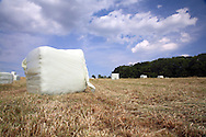 Large hay bales in summer meadow