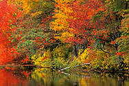Fall colors on trees in rural Connecticut