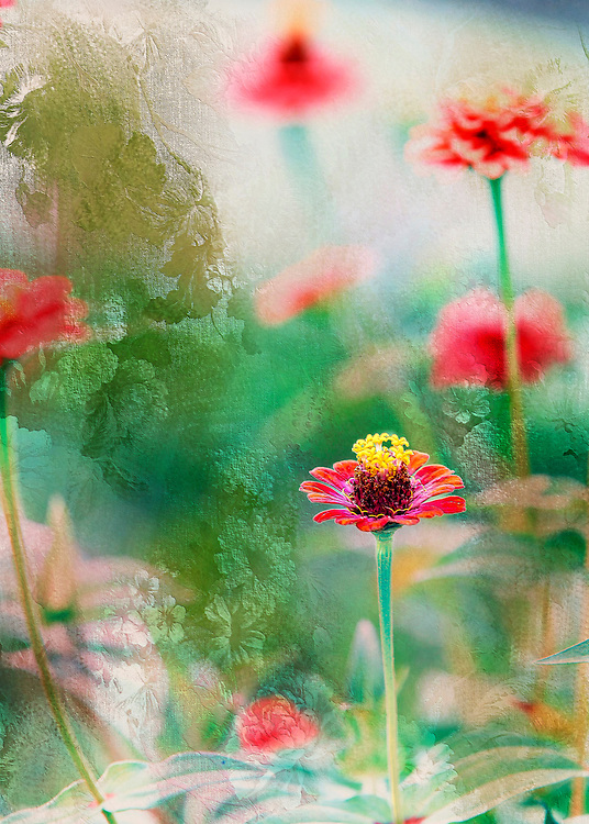 Zinnia Floral Imprint Art Montage From The Garden With Greens, Reds and Yellow Floral Highlight Details