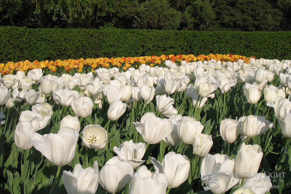 Cantigny Gardens and Park is on the estate of Robert R McCormick.  On the estate are two museums and large gardens.
