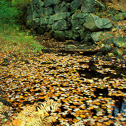 Leaves float below the tailrace next to Wiswall Dam on the Lamprey River.  Durham, NH
