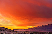 Amazing Dawn Color, looking South from the Volcanic Tablelands toward Bishop, Inyo National Forest, Inyo County, Caifornia