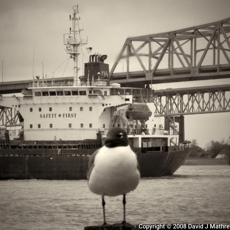 Seagull, Dusita Naree, and Bridge along the Mississippi River in New Orleans, Louisiana. Image taken with a Nikon D300 and 18-200 mm lens (ISO 200, 90 mm, f/22, 1/60 sec). Processed with Capture One Pro (including conversion to B&W).