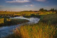 Stream flowing through coastal marsh wetlands at Limantour Beach, Point Reyes National Seashore, Marin County, California