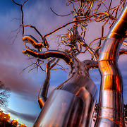 """Stainless steel dendritic tree sculpture at the Nelson Atkins Museum of Art, """"Ferment,"""" by Roxy Paine. Kansas City, Missouri."""