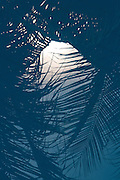 Palm fronds reflected in the surface of a pool at the Saigon Phu Quoc Resort and Spa, on the island of Phu Quoc in southern Vietnam.