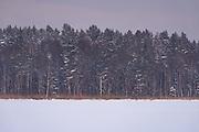 Dusky coast and forests along lake Sloka, Kemeri National Park (Ķemeru Nacionālais parks), Latvia Ⓒ Davis Ulands   davisulands.com