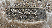 Mineral deposits from geothermal activity in Yellowstone National Park create pebble-like structures which rest on and around a piece of rotting wood