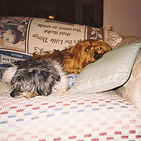 1. When was this photo taken? <br /> <br /> I think in 2000<br /> <br /> 2. Where was this photo taken?<br /> <br /> My house<br /> <br /> 3. Who took this photo? <br /> <br /> Cathy Menendez<br /> <br /> 4. What are we looking at here? <br /> <br /> My dogs Skippy and Minnie<br /> <br /> 5. How does this old photo make you feel? <br /> <br /> A little sad, but it's nice to see them together.<br /> <br /> 6. Is this what you expected to see? <br /> <br /> Yes, the only photos on the roll that I remember taking were of my dogs.<br /> <br /> 7. Does this photo bring back any memories? <br /> <br /> Of course, many happy memories<br /> <br /> 8. How do you think others will respond to this photo? <br /> <br /> Maybe they will remember pets that they once loved.
