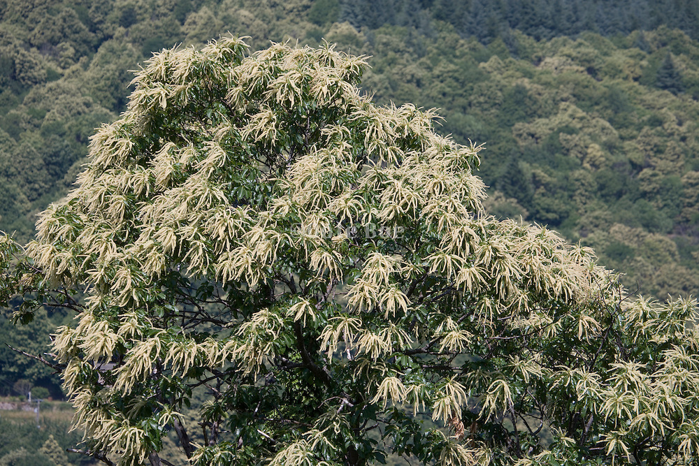 abstract view of a flowering tree top