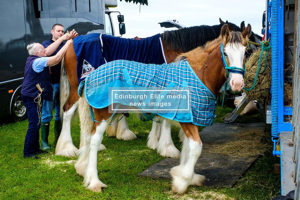 Biggar, South Lanarkshire, Scotland 23 July 2016<br /> <br /> Preparing horses for showing.<br /> <br /> <br /> (c) Andrew Wilson | Edinburgh Elite media