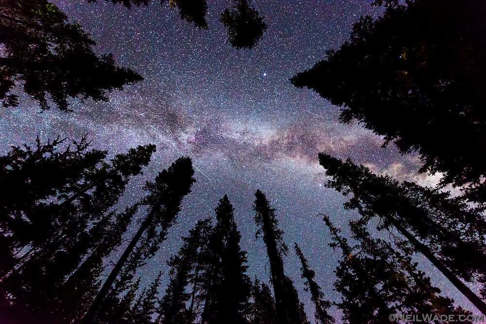 The Milky Way stretches across the sky above a tall Oregon Forest.