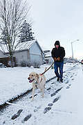 USA, Oregon, Keizer, Labrador Retriever on her morning walk in the snow, MR