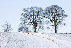 Beech trees in the snow near Glebe Cottage in winter