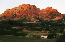 Feb 27, 2006; Stellenbosch, SOUTH AFRICA; Vineyards at sunset in Stellenbosch, South Africa. A main tourist attraction of the Western Cape, Stellenbosch boosts over 200 estates that offer wine tastings. Exports of South African wines have grown substantially since the end of international sanctions imposed under apartheid (Credit Image: © Krista Kennell/ZUMAPRESS.com)