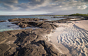 Beach, Punta Espinosa, Fernandina Island, Galapagos Islands