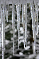 24 February 2008: Melting ice cycles in the shade during a late winter storm in Lake Tahoe, Truckee Nevada California border in the Sierra Mountains.