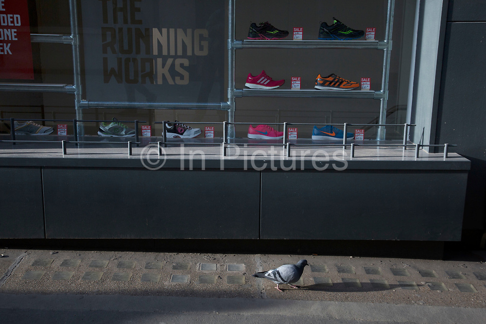 Pigeon appearing to run past a running specialist trainers shop, London, UK.