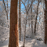 Fresh Snow in Breakheart Reservation, Wakefield, MA
