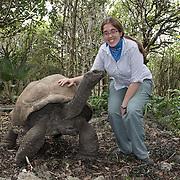 Woman on Ile aux Aigrettes with an Aldabra Giant Tortoise, Aldabrachelys gigantea.