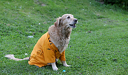 Olly Murs the retriever in a Hull City shirt