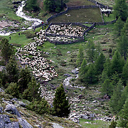 Sheep and lambs make their way out of an enclosure, 2,011 meters above sea level, in the village of Kurzras (Maso Corto) in the autonomous region of South Tyrol, Italy, June 9, 2018. Picture taken June 9, 2018. REUTERS/Lisi Niesner - RC1122DBE2D0