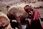 Kakai with her sheep. In the Wakhi settlement of Shuwor Sheer (3690m). Matthieu and Mareile Paley trekking with a donkey named Clementine over 5 high passes across the Hindukush, between Pakistan and Afghanistan.