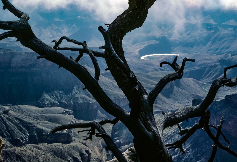 The Colorado River, Juniper tree snag, North Rim, Grand Canyon National Park, Arizona, USA