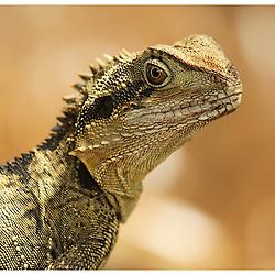 Animal Photography from jaydon Cabe