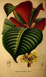 Belgique horticole.<br /> Liége.<br /> https://biodiversitylibrary.org/page/41955856